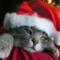 LCクリスマス限定フレーバーまとめ ヌレヌレやリビドー